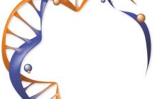 Bisakah DNA Rekombinan Digunakan Untuk Memenuhi Kebutuhan Sesuai Keinginan Kita?