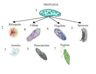 """Tugas Mikrobiologi """"Parasit Sebabkan Penyakit"""""""