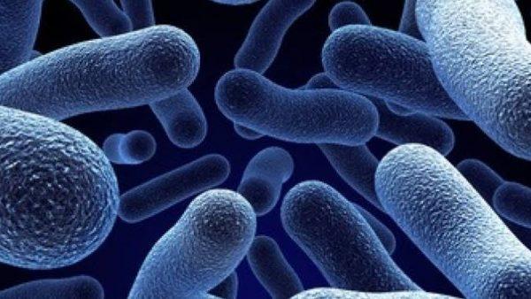 Apa Itu Prinsip Penyakit dan Epidemiologi??