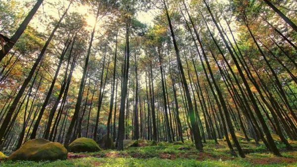 Yuk Selamatkan Hutan di Bumi